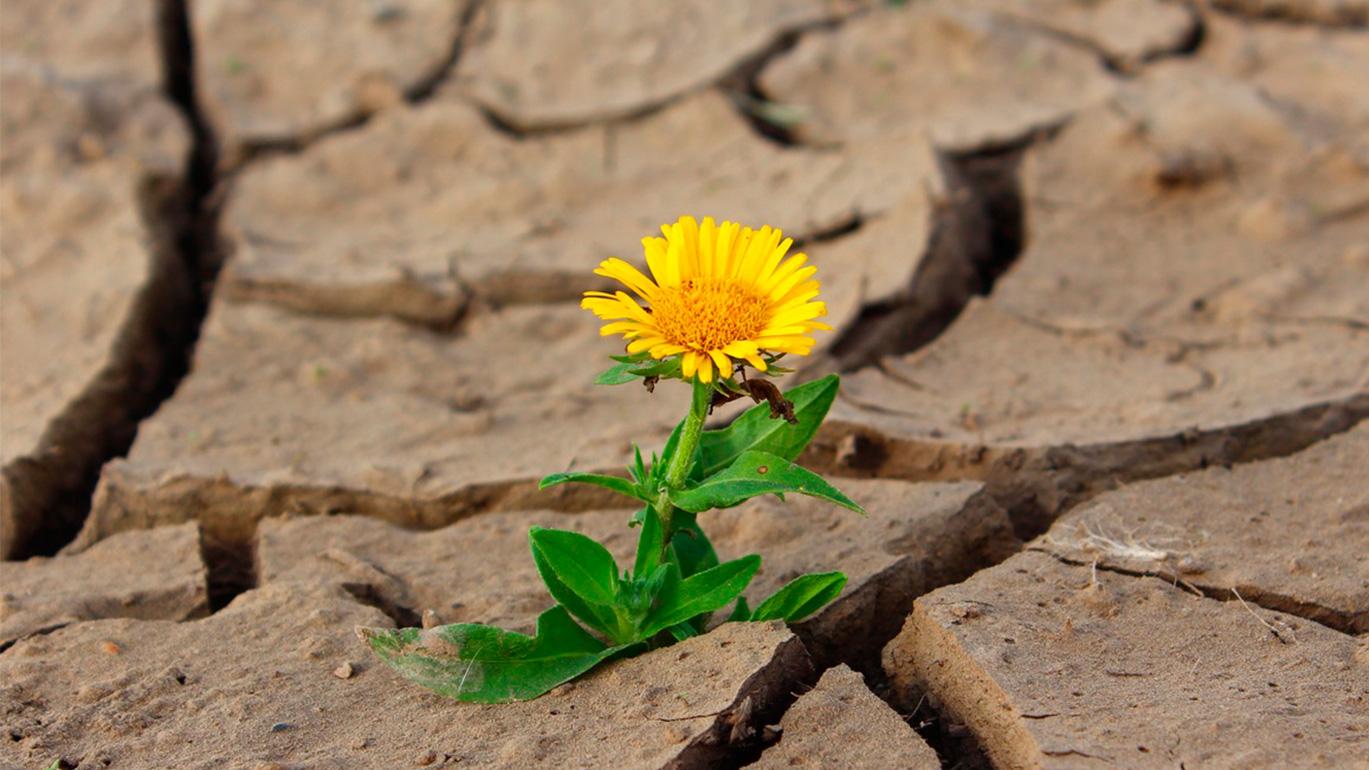 el-poder-de-activar-pensamientos-positivos