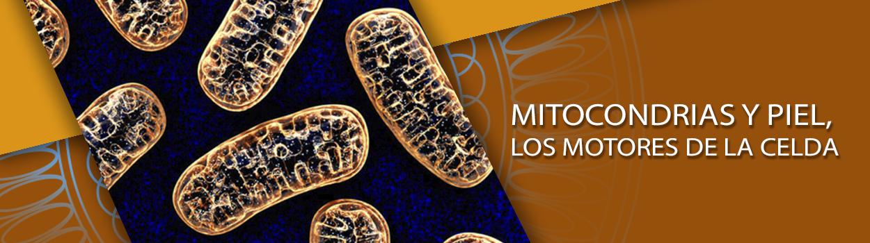 Mitocondrias y piel