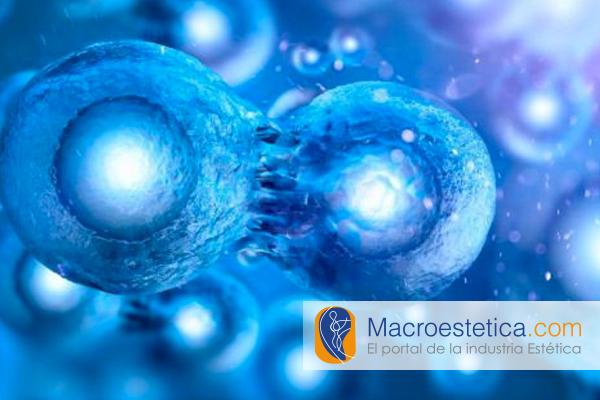 Descubren un vínculo entre el sistema nervioso y las células madre que regeneran el pigmento.