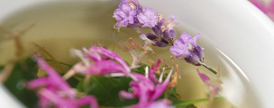 Terapia floral de Bach según patrón transpersonal en dermatitis de causa externa