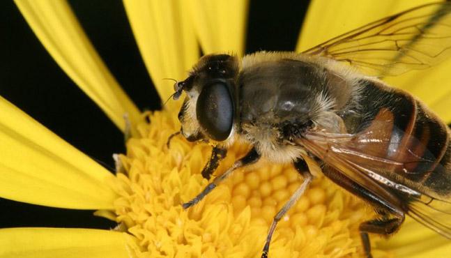 Apitoxina o veneno de abeja: ¿alternativa natural al bótox?