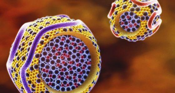 Colesterol en las membranas plasmáticas de los queratinocitos