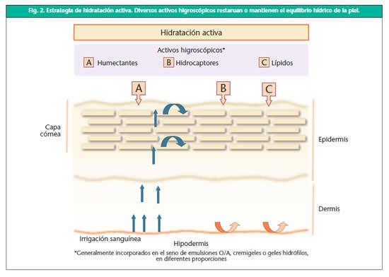 Mecanismos de hidratación activa y pasiva