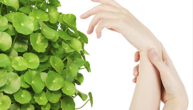 La planta de la belleza: la centella asiática