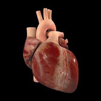 Crean membrana electrónica que puede mantener un corazón latiendo por siempre (VIDEO)