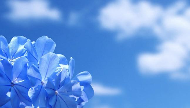 Azuleno: origen, propiedades y composición química
