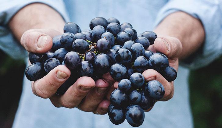 El resveratrol presente en la uva podría ayudar a adelgazar