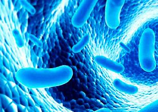 diferencia-entre-probioticos-y-prebioticos