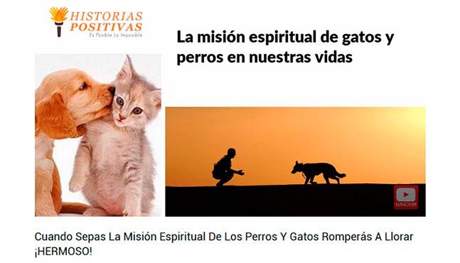 Misión espiritual de perros y gatos